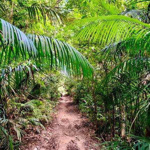 Atherton Tablelands Hiking Trails